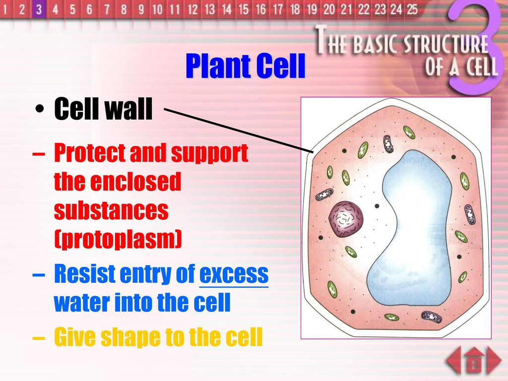Penetration of substances into cells