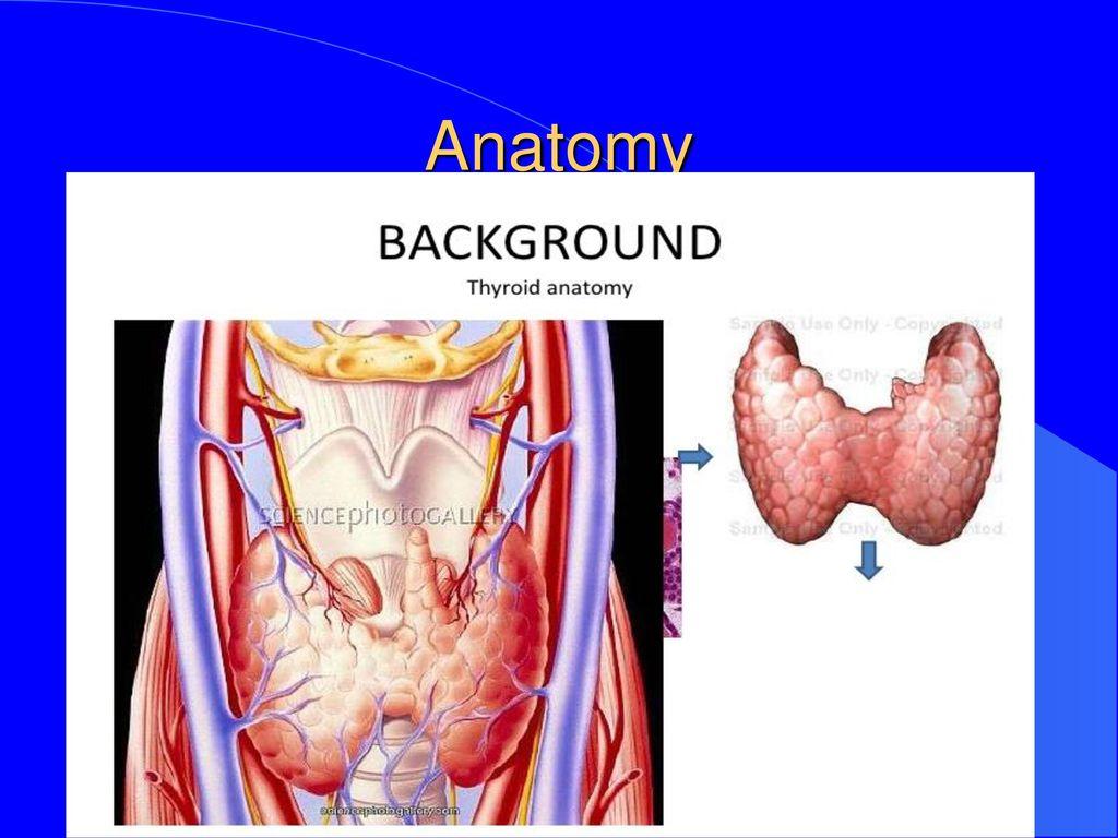 Fancy Thyroid Anatomy Ppt Ideas - Anatomy and Physiology Tissue ...