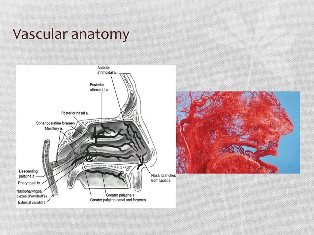Großartig Ct Pns Anatomie Bilder - Menschliche Anatomie Bilder ...