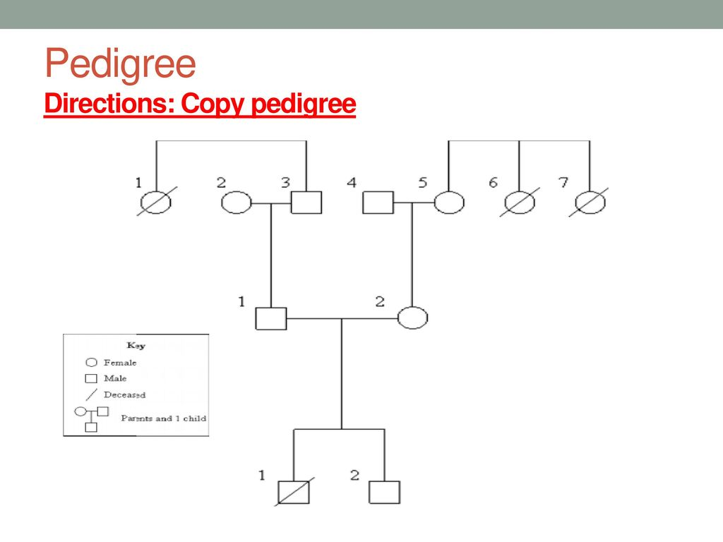 Pedigree case studies case study 1 case study ppt download 9 pedigree directions copy pedigree geenschuldenfo Images