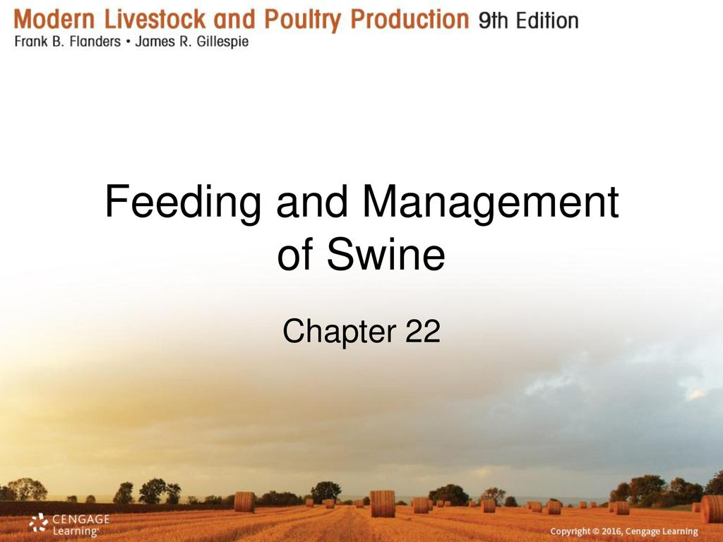 feeding and management of swine Swine feeding and fitting guidelines ryan harrell feeding pigs can be difficult and can require time  feeding may require individual feeding for show pigs.