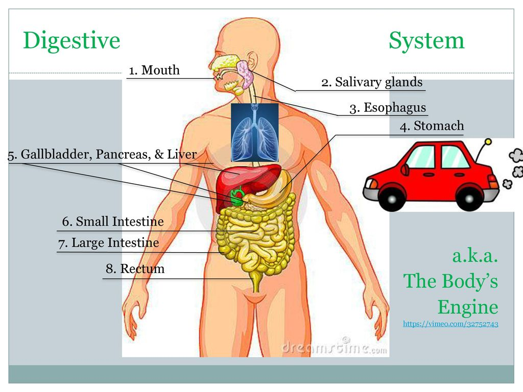 BODY SYSTEMS 7TH GRADE mr. fisher. - ppt download