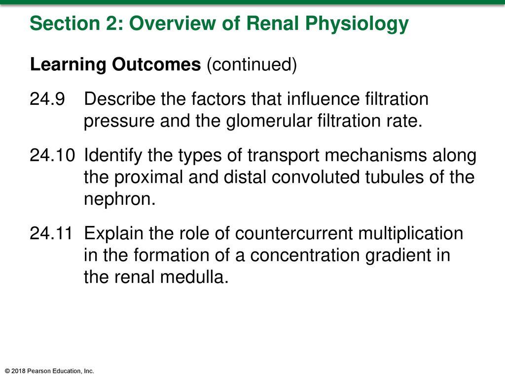 Großartig Filtration Definition Anatomy And Physiology ...