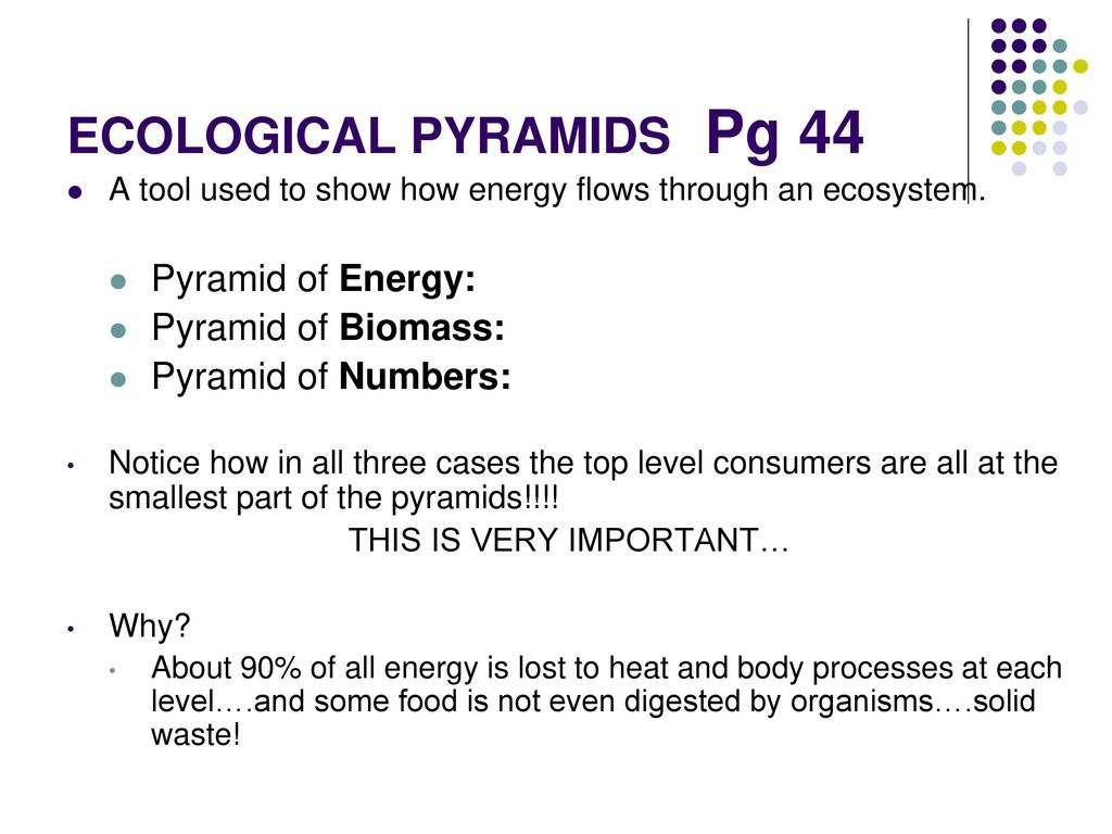 Ecology Chapter 2 Pages ppt video online download – Ecological Pyramids Worksheet