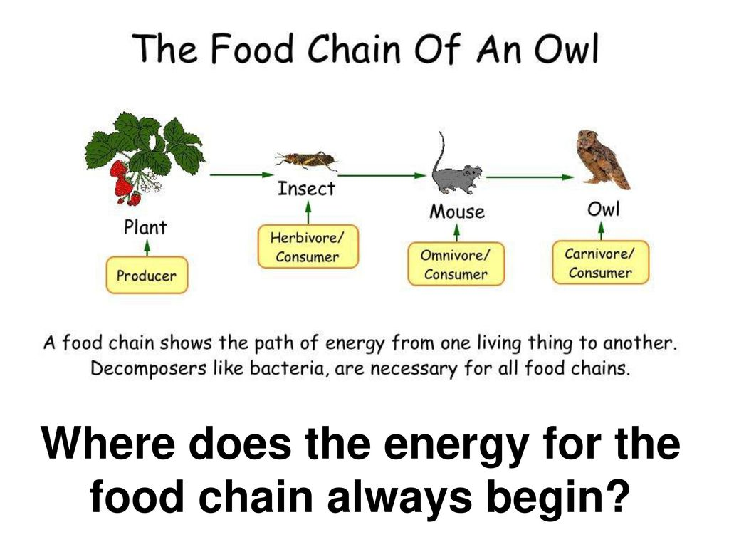 Food chain notes in hindi 2018 - Altcoin 0x formats