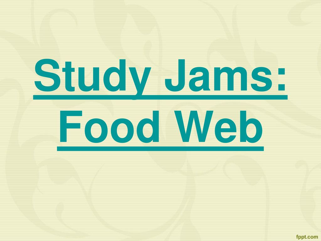 Video: Food Chains - by StudyJams | Educational Video ...
