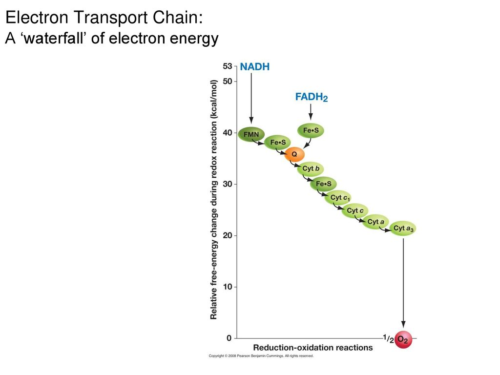 Respiration big picture and the electron transport chain ppt 8 electron transport pooptronica Choice Image