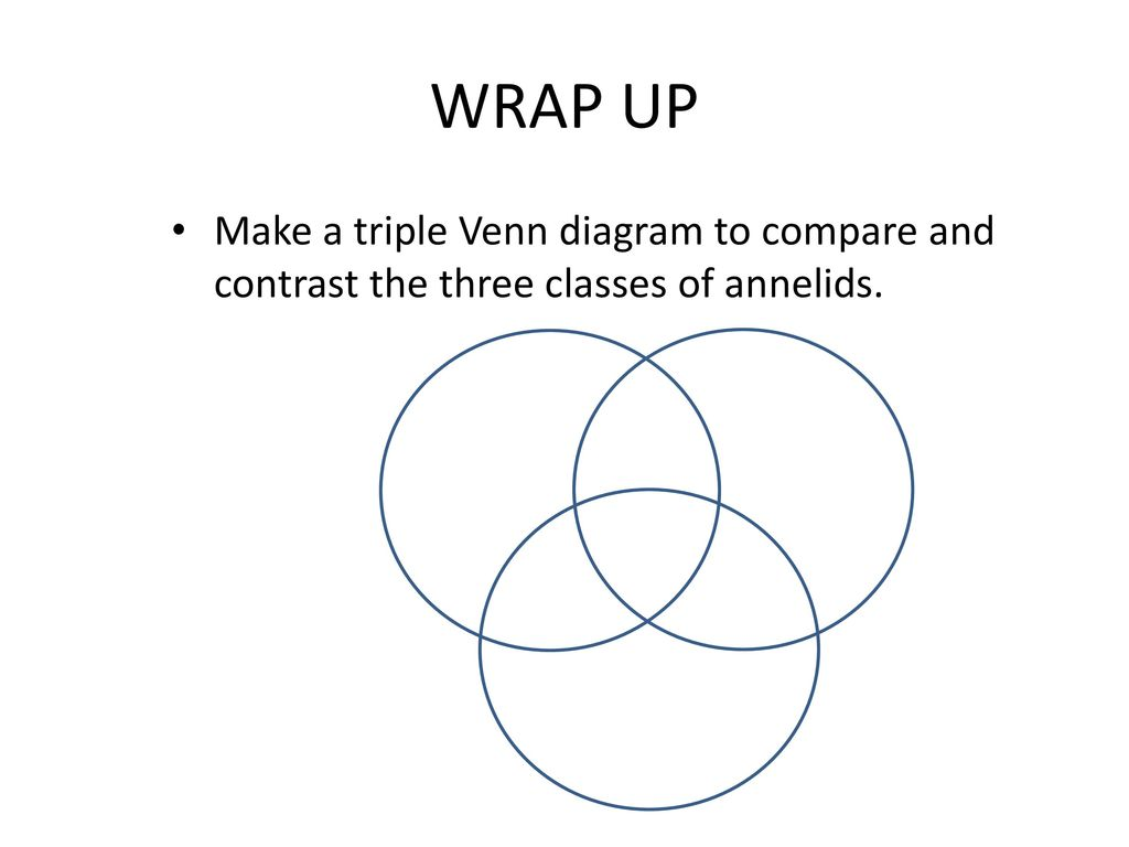 Warm up compare and contrast the three main classes of mollusks 9 wrap up make a triple venn diagram to compare and contrast the three classes of annelids pooptronica