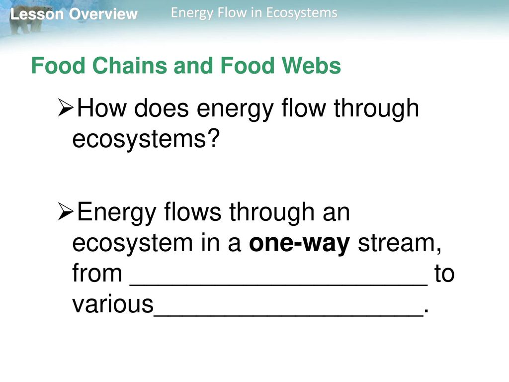 33 energy flow in ecosystems ppt download 3 food geenschuldenfo Image collections