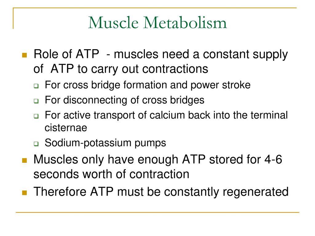Skeletal Muscle Tissue - ppt download