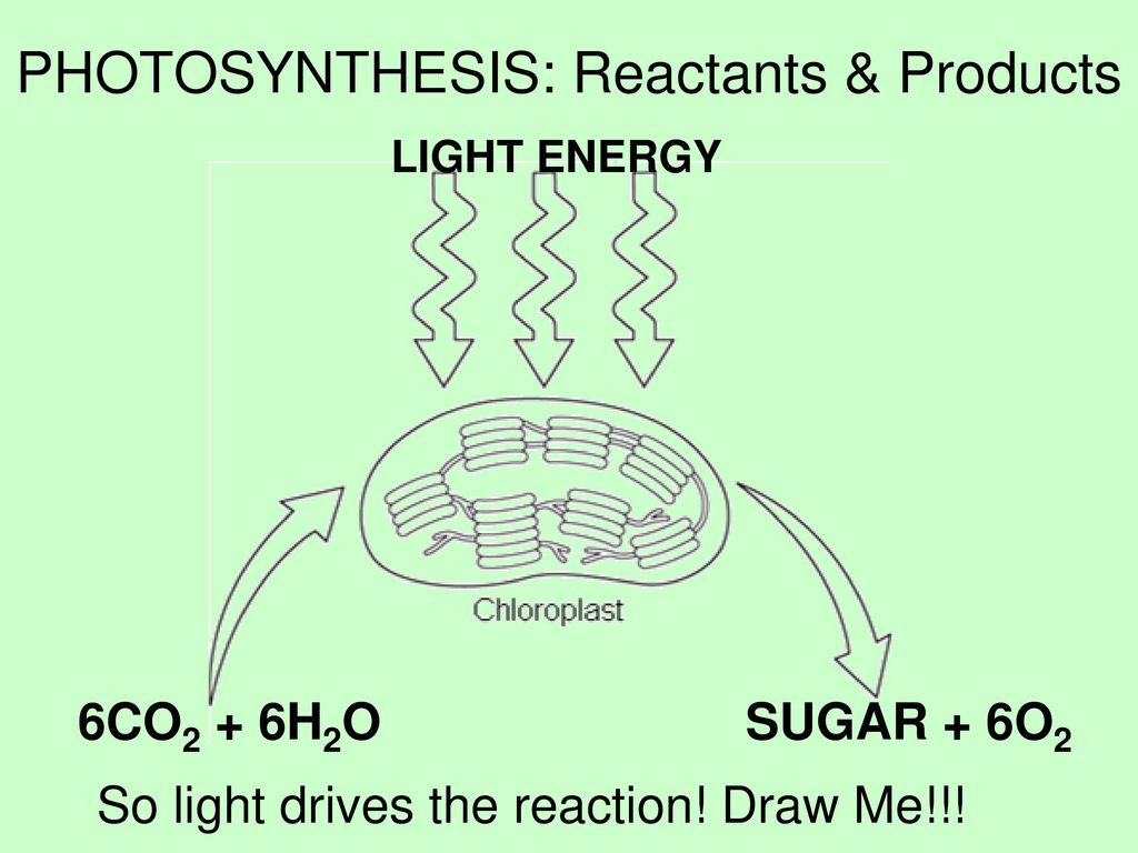 products of photsynthesis What is photosynthesis why is it important answers provided for kids along with the process of photosynthesis, chemical and word equation and much more.