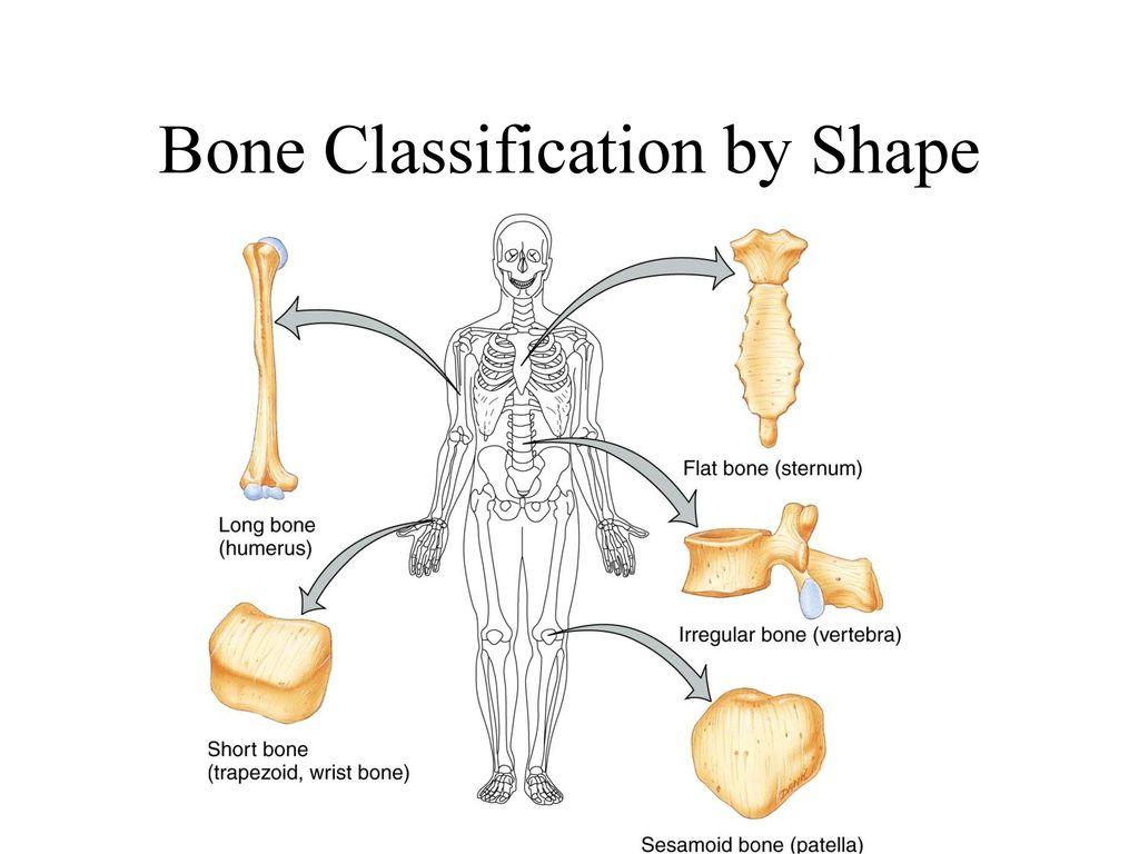 Bone By Bone Ecosia