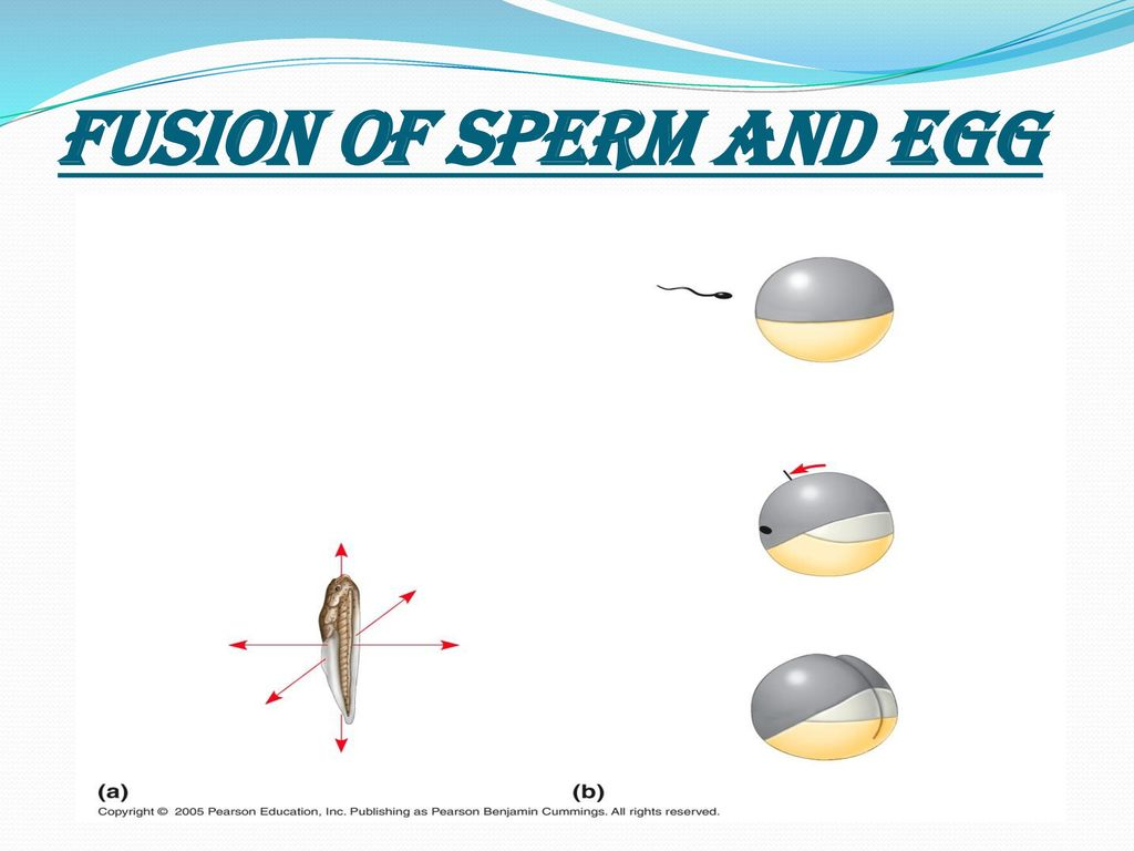 Sperm and egg not developing