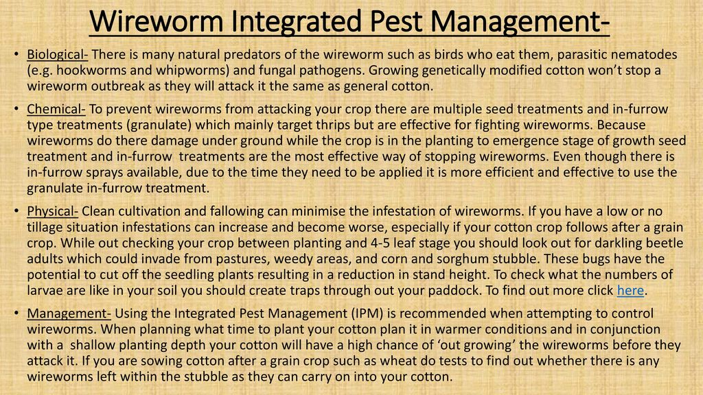 Pest control in cotton...