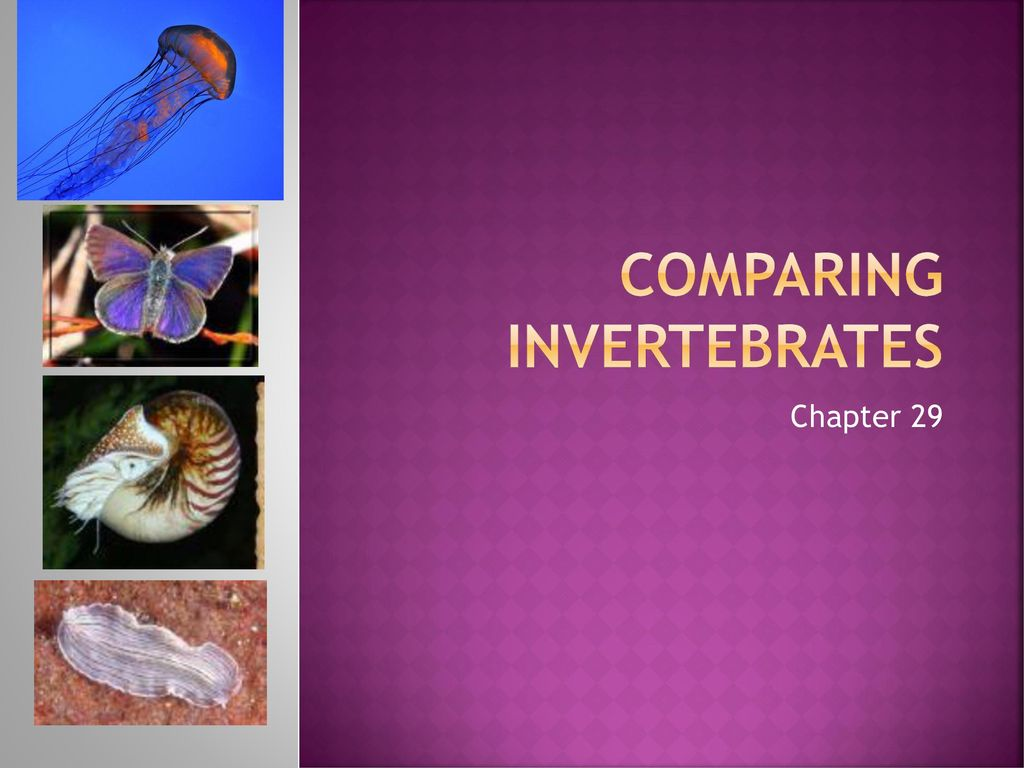 Comparing Invertebrates Ppt Video Online Download