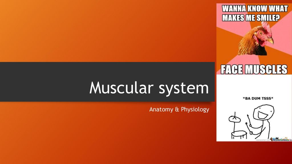 Muscular system Anatomy & Physiology. - ppt download