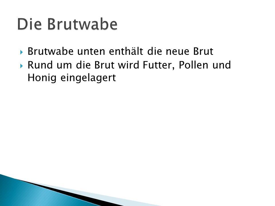 Die Brutwabe Brutwabe unten enthält die neue Brut
