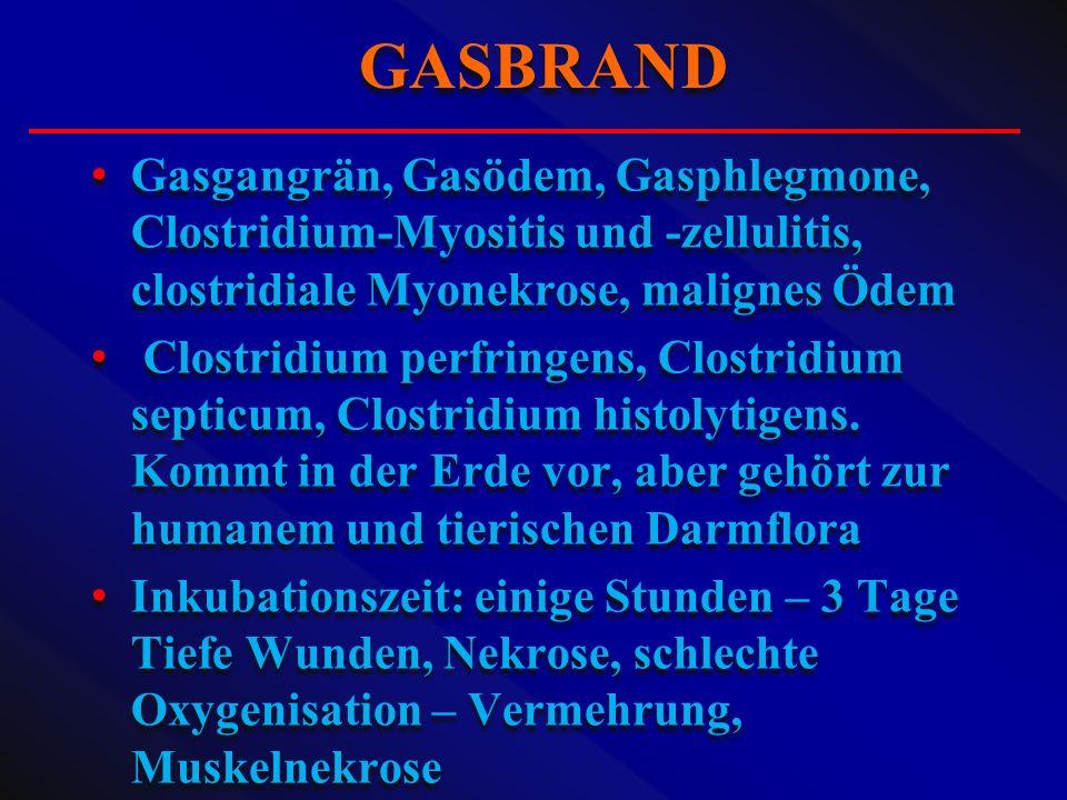 GASBRAND Gasgangrän, Gasödem, Gasphlegmone, Clostridium-Myositis und -zellulitis, clostridiale Myonekrose, malignes Ödem.