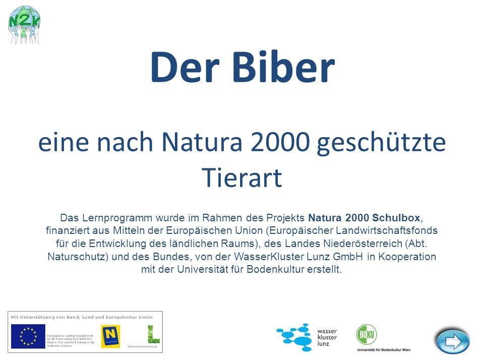 Der Biber eine nach Natura 2000 geschützte Tierart