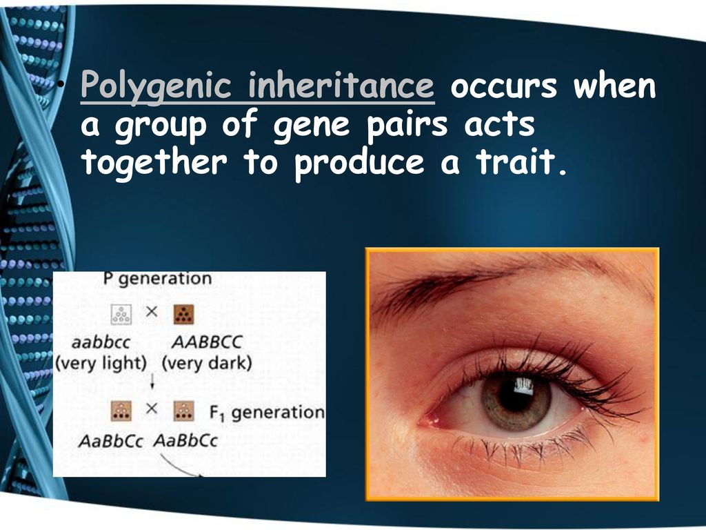 Genetics mrs morgan life science 7th science 1 ppt download polygenic inheritance occurs when a group of gene pairs acts together to produce a trait nvjuhfo Choice Image