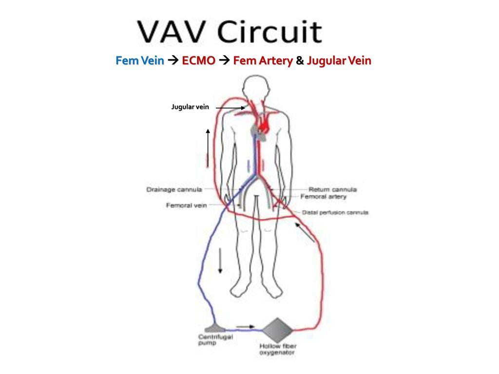 Internal jugular vein cannulation anatomy 6358846 - follow4more.info