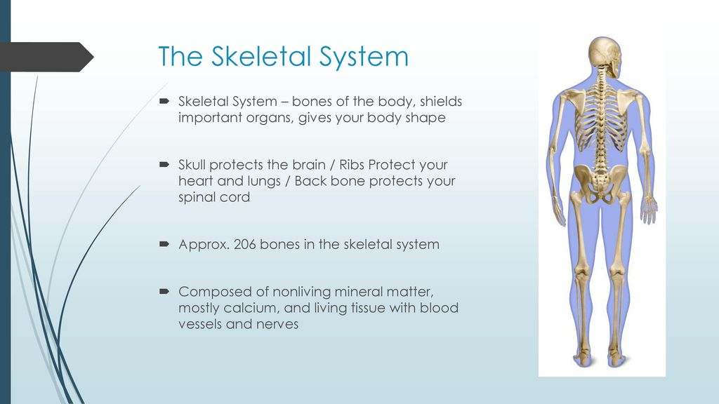 Physical Health: Skeletal and Muscular Systems - ppt download