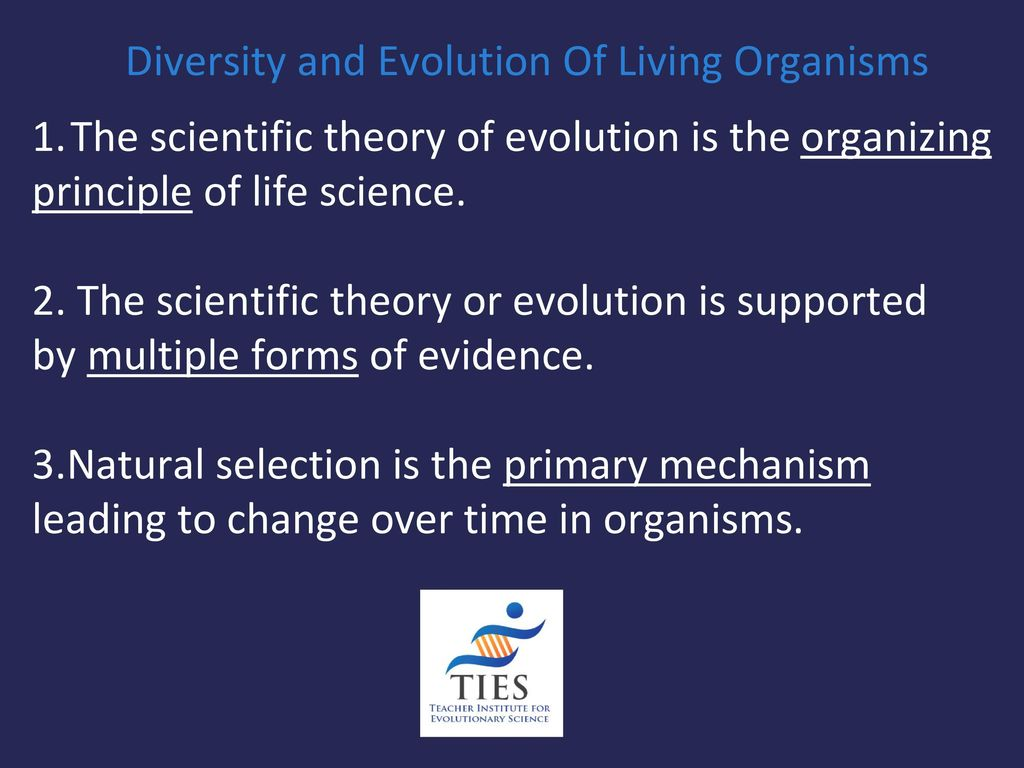 evolution of the theory of forms We suggest that the starting point of evolution theory cannot be limited  to  different forms of indeterminism in relation to the state of the entity.