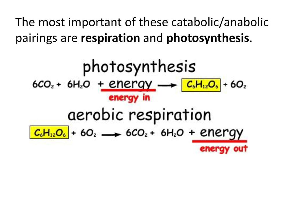 the importance of photosynthesis and respiration Photosynthesis is important for me because it  what us humans breath in without the  photosynthesis and cellular respiration are viewed as complementary .