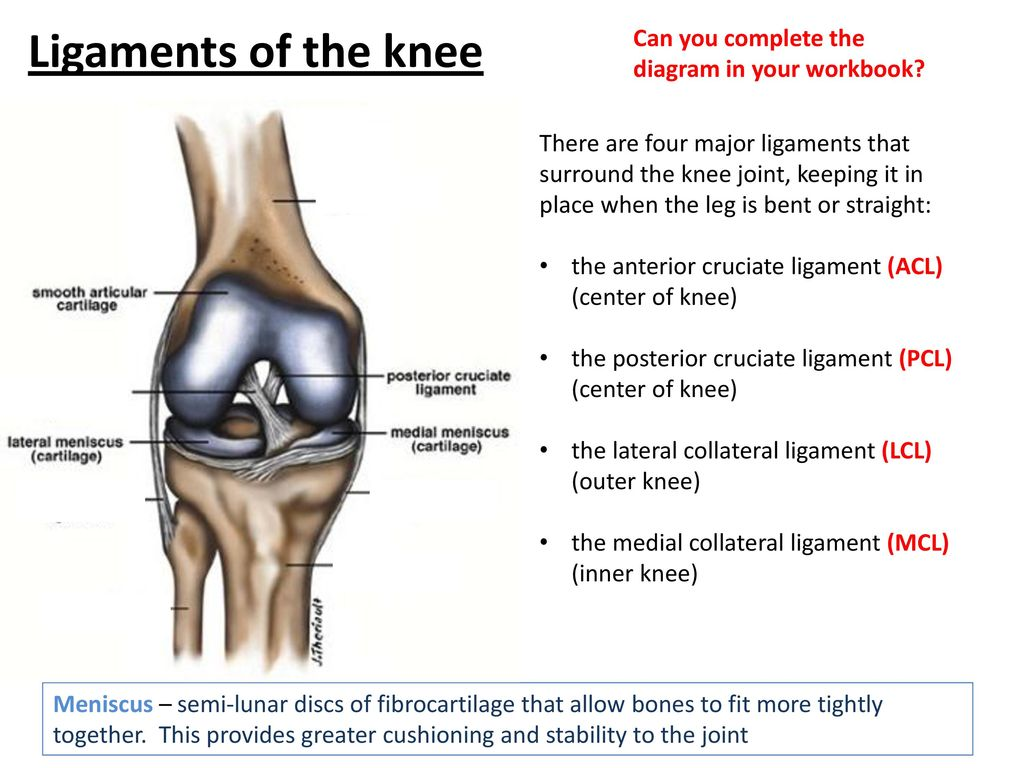 Joints ib sehs ppt download ligaments of the knee can you complete the diagram in your workbook pooptronica
