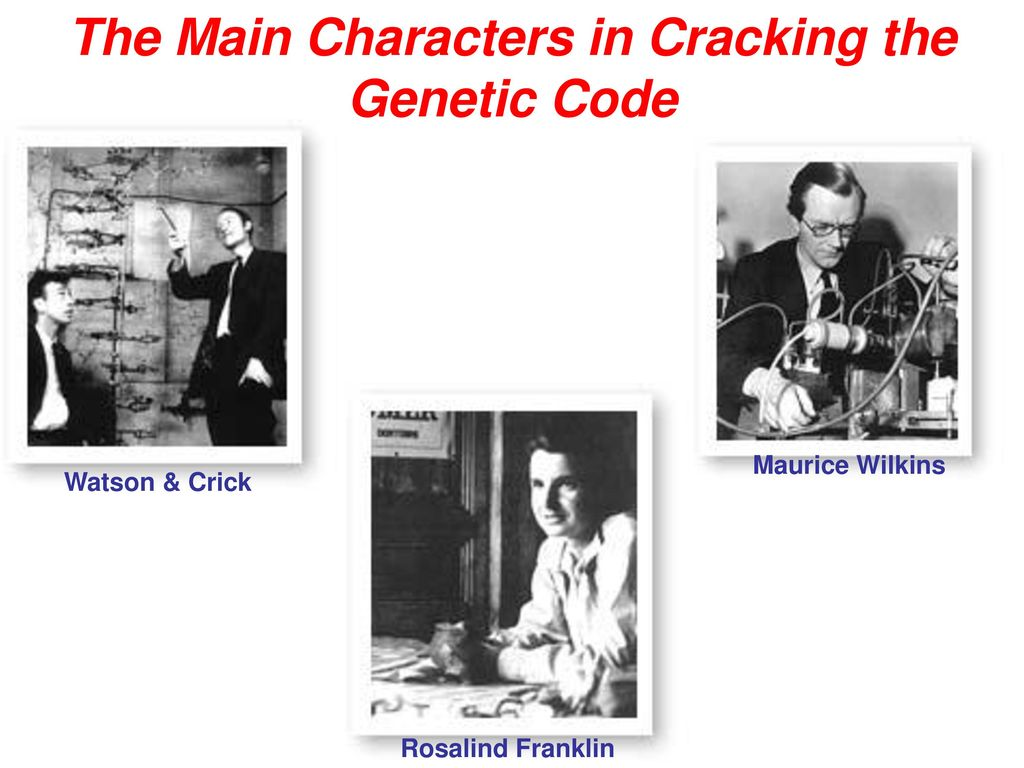 cracking the genetic code Figure 3-e-2 an approach used by marshall nirenberg and his colleagues to crack the genetic code.