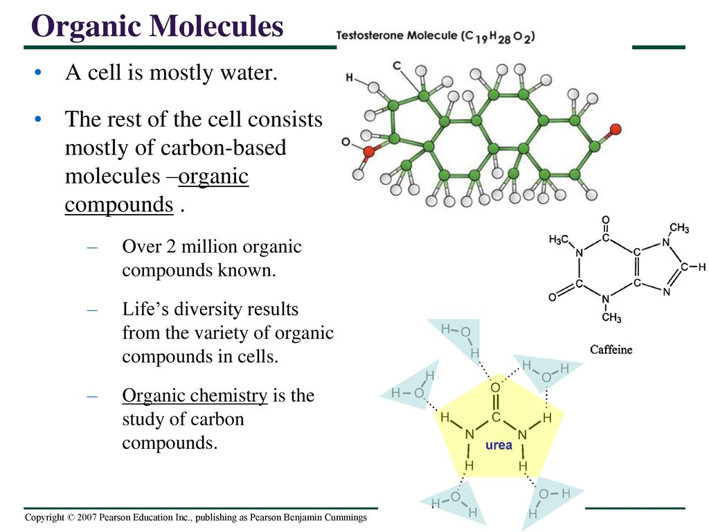 CHAPTER 3 The Molecules of Life. - ppt download