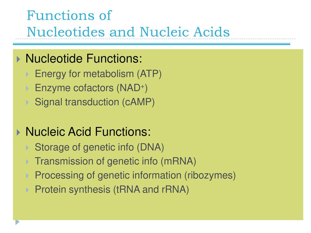 Short Essay on Nucleic Acids