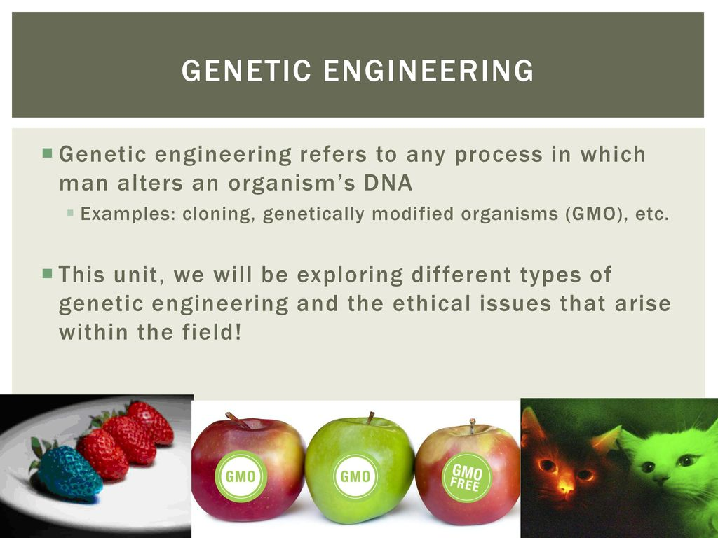 Genetically modified organisms essay example Term paper