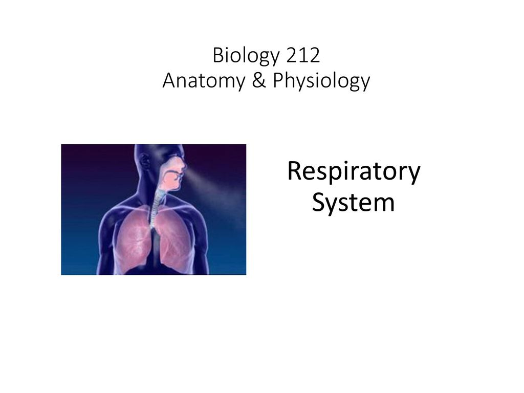 Biology 212 Anatomy & Physiology - ppt video online download