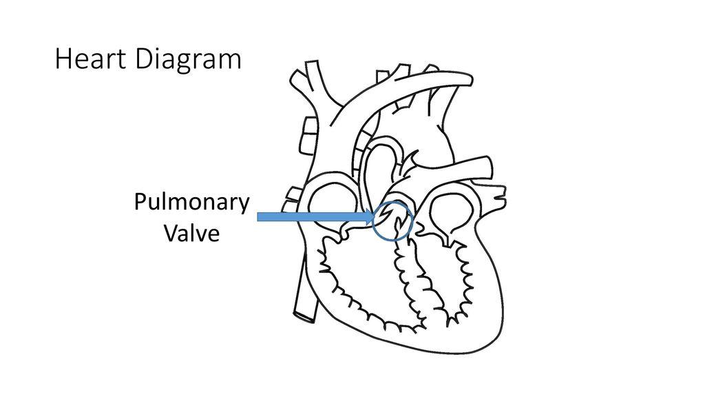 Heart diagram superior vena cava ppt download 6 heart diagram pulmonary valve ccuart Choice Image