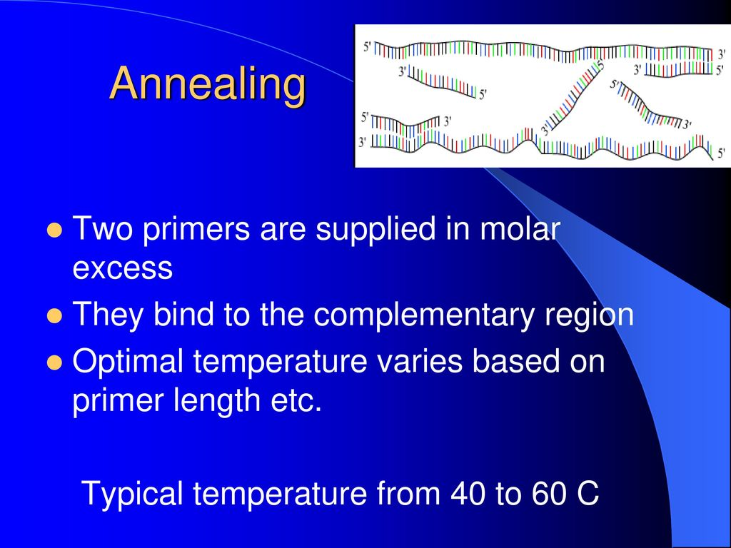 how to choose an annealing temperature for pcr