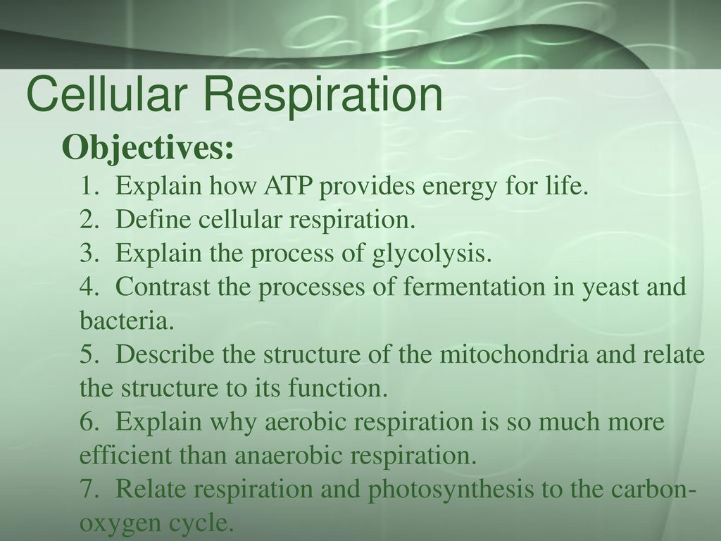 the role of mitochondria in the process of respiration This is a colored transmission electron micrograph (tem) of a mitochondrion mitochondria are a type of organelle found in the cytoplasm of eukaryotic cells they oxidize sugars and fats to.