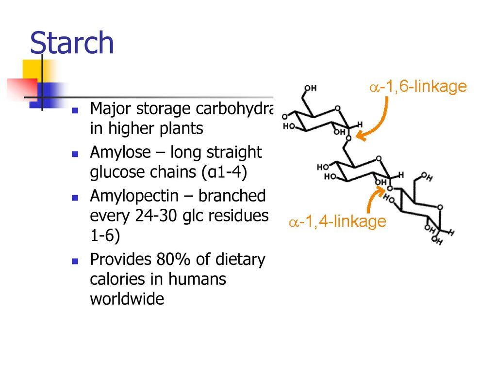 Starch Major Storage Carbohydrate In Higher Plants