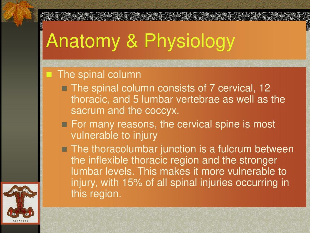 Spine and Spinal Cord Trauma - ppt download