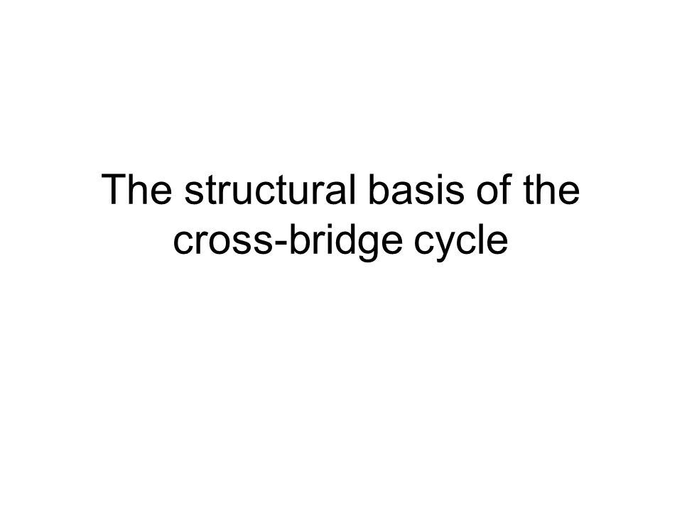 The structural basis of the cross-bridge cycle