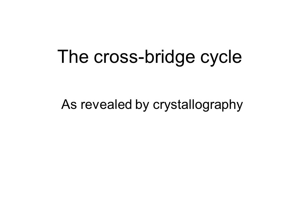 The cross-bridge cycle