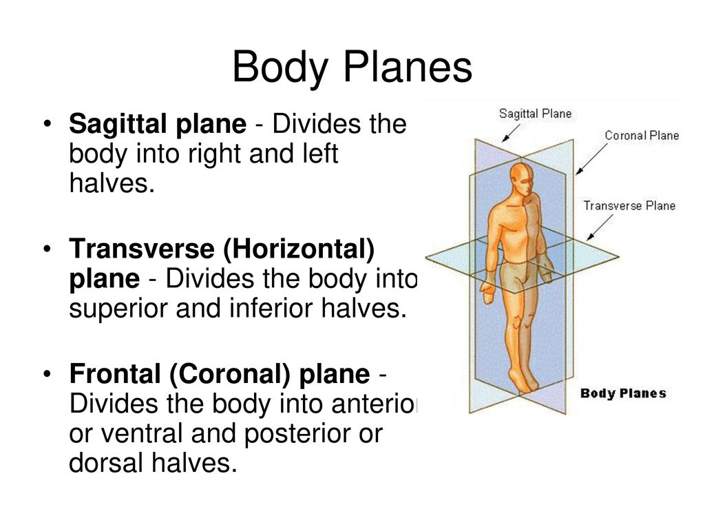 Learning the anatomy of the body 7937463 - follow4more.info