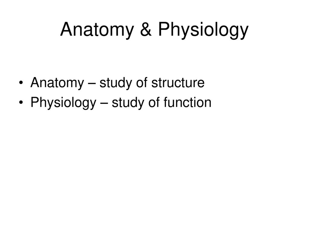 Gemütlich Anatomy And Physiology Prefixes And Suffixes List Ideen ...