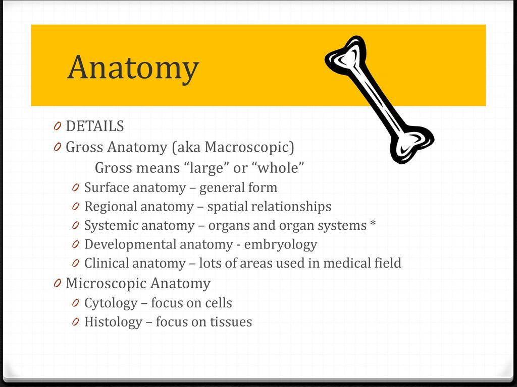 Outstanding Clinical Gross Anatomy Embellishment - Physiology Of ...