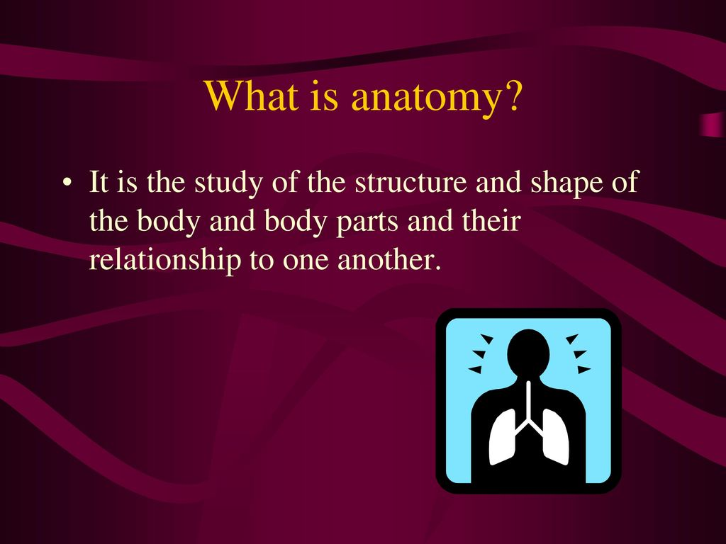 What is anatomy the study of 2599515 - 1cashing.info