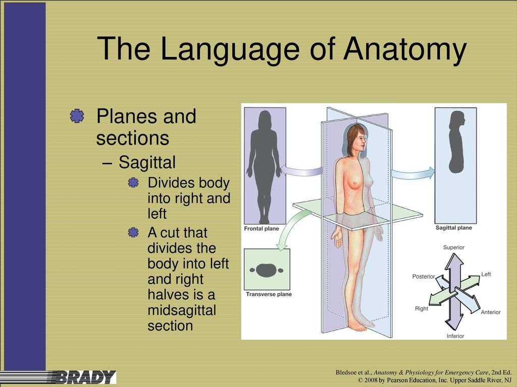 Chapter 1 An Introduction to Anatomy and Physiology - ppt video ...