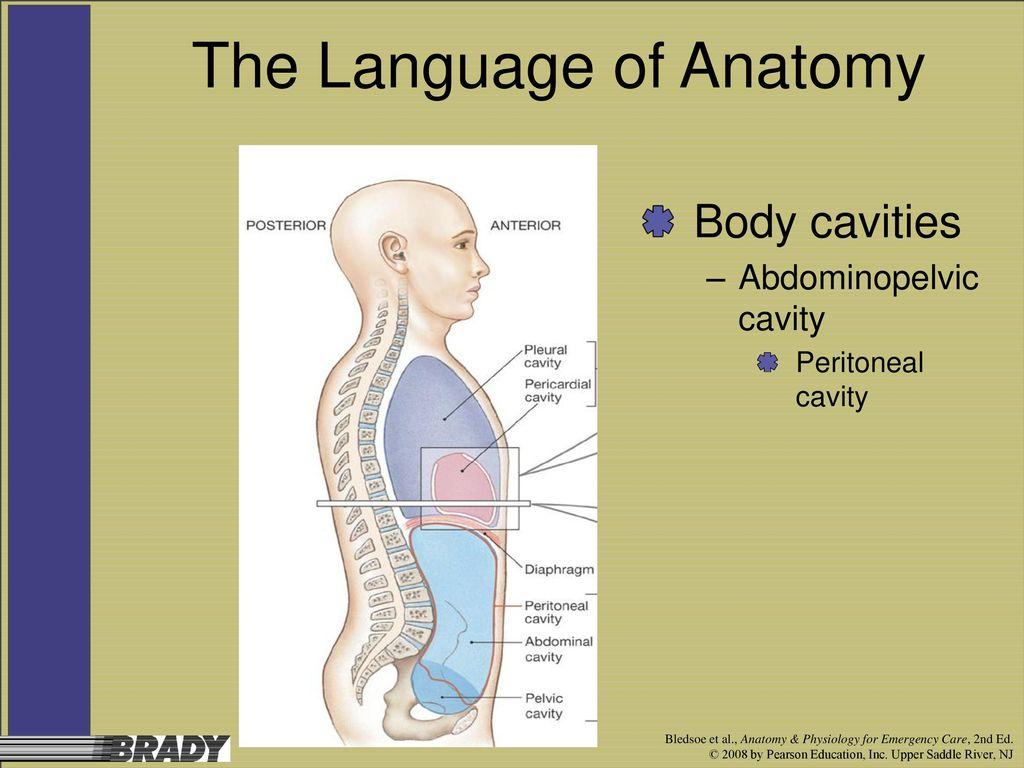 Atemberaubend Language Of Anatomy And Physiology Zeitgenössisch ...