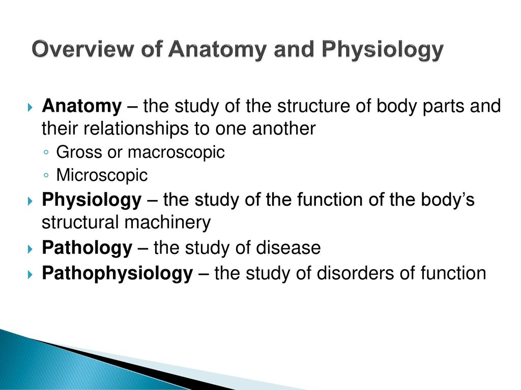 general introduction of anatomy and physiologies Bio 110- i general anatomy and physiology (online) science department semester: summer 2014 catalog course description: this course is a general introduction to the anatomy and physiology of the human.