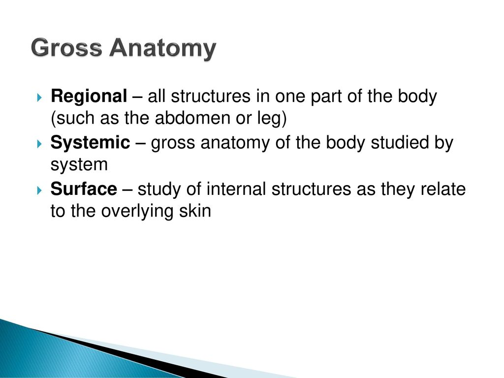 Fine Gross Anatomy Syllabus Crest - Physiology Of Human Body Images ...