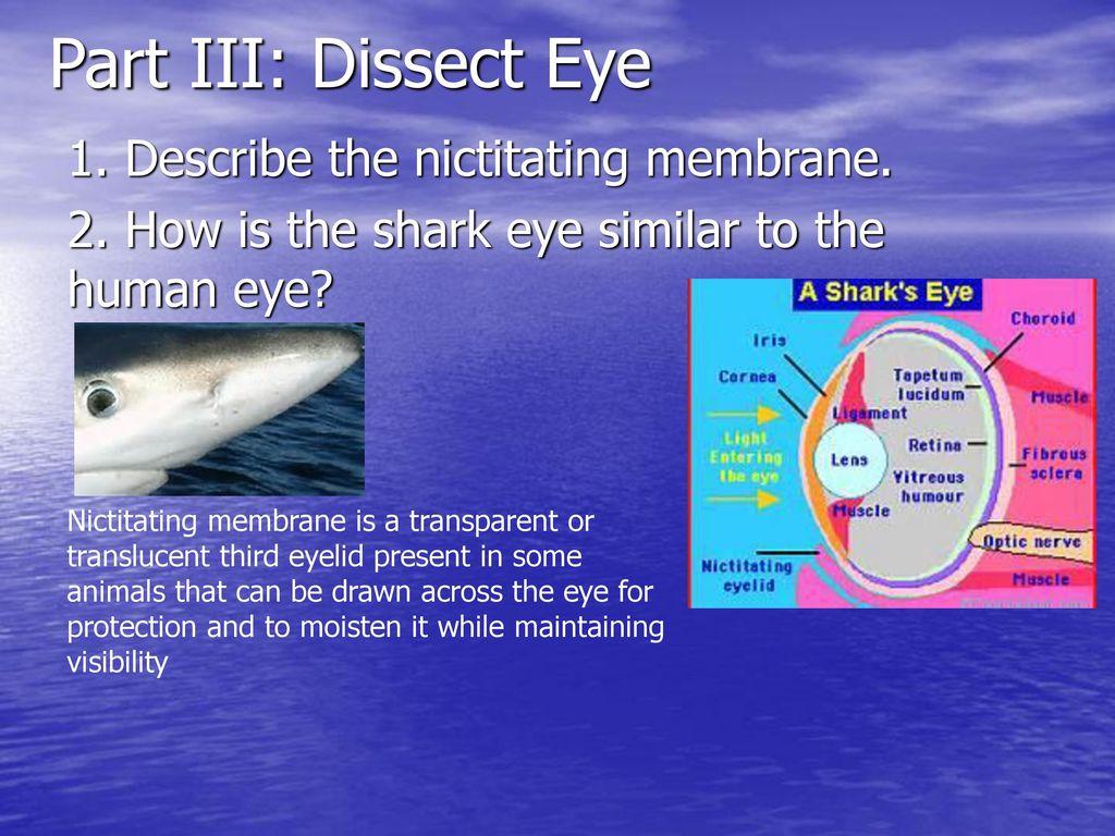 Nictitating membrane